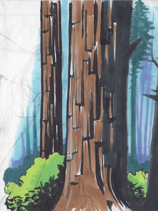 redwood 001.jpg